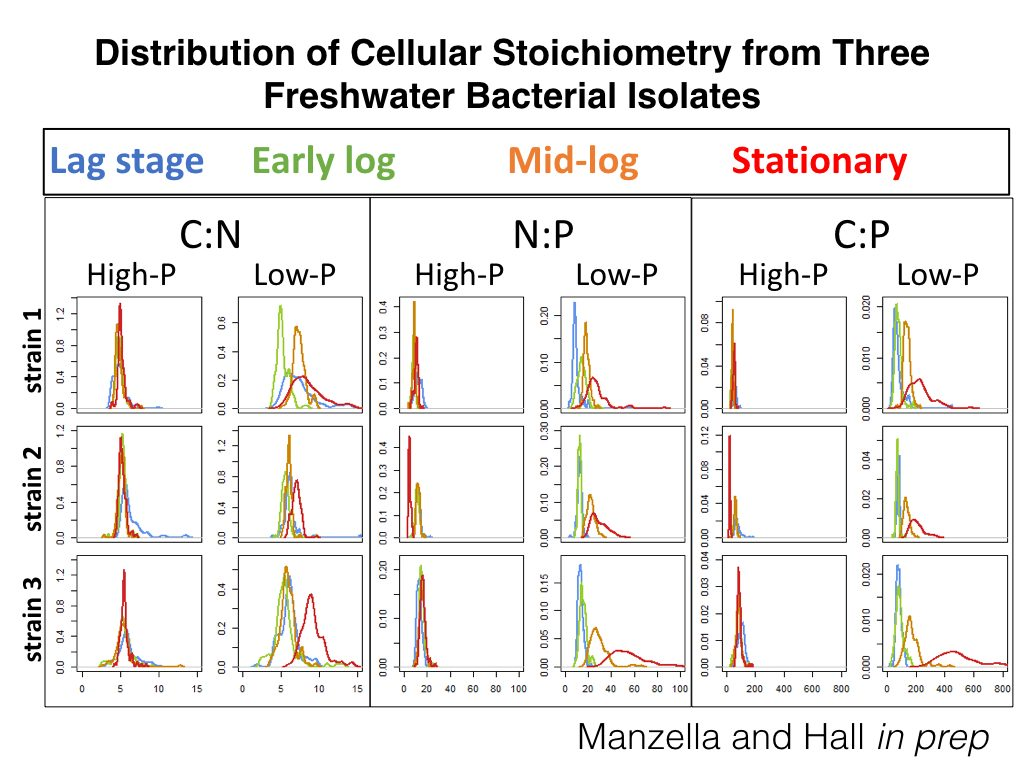 distribution of cellular stoichiometry from hree freshwater bacterial isolates