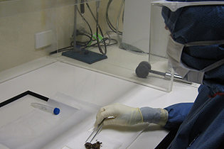 essica Metcalf working at the Australian Centre for Ancient DNA to recover microbial DNA from viking latrine material