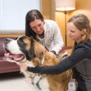 Dog at the Vet Teaching Hospital